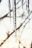 Icicles at sunset in spring evening — Stock Photo
