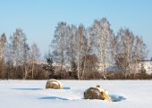 Hay in the snowy field — Stok fotoğraf