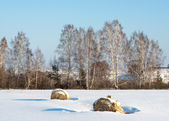 Hay in the snowy field — Stock Photo