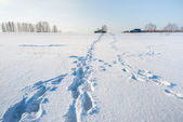 Car and footsteps on the snowy field — Stock Photo