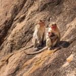 Monkey family in the mountain — Stock Photo #54782623