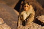Monkey in the mountain — Stock Photo