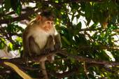 Monkey in the forest — Stock Photo