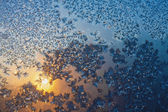 Frost and snowflakes on frozen window — Stock Photo