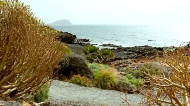 Wild stone and rock shore or coast with plants of ocean or sea — Stock Video