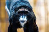Black monkey in zoo — Stock Photo