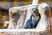 Monkey in zoo — Stock Photo