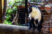 Monkey in zoo cell — Stock Photo