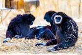 Monkeys in zoo — Stock Photo