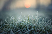 Green grass with morning frost and red sun — Stok fotoğraf
