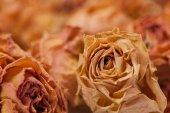 Dry tea roses closeup macro — Stock Photo