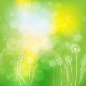 Dandelions on yellow-green background — Stock Vector