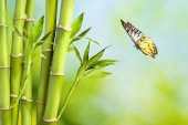 Fresh bamboo and butterfly — Stock Photo