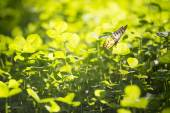 Green Grass with butterfly — Stock Photo