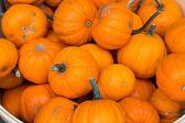 Small Pumpkins — Stock Photo