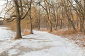 Path in the Winter with Snow and Trees — Stock Photo