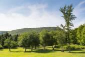 Trees and Hills in Cape Breton, Nova Scotia — Stock Photo