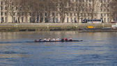 Rowers on the River Thames — Stock Photo