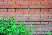светло оранжевый кирпич стены и крапивы кусты перед ней как b — Стоковое фото