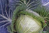 Cabbage closeup as background — Stock Photo