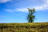 Norwegian Landscape with single tree — Zdjęcie stockowe
