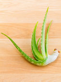 Aloevera - Natural Spas Ingredients for skin care. — Stock Photo
