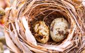 A nest filled with bird eggs in the branches of a tree. — Stock Photo