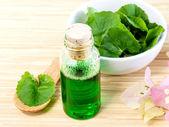 Natural Spa Ingredients . - Centella asiatica  Urban, Asiatic Pe — Stock Photo