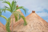 Branches of palm trees on the roof — Stock Photo