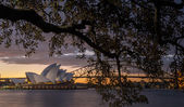Sunset at Opera house in Sydney — Stock fotografie