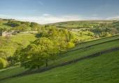 Greenery in the Yorkshire Dales — 图库照片