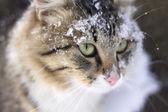 Portrait of a beautiful fluffy cat — Zdjęcie stockowe