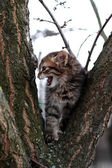 Frightened beautiful kitten in a tree meows — Stock Photo