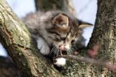 Little fluffy kitten on the tree in nature — Stock Photo