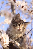 Little fluffy kitten on the tree with flowers — Stock Photo