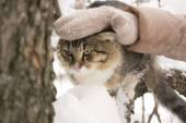 Fluffy cat sitting on a tree branch in winter — Stock Photo