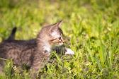 小さな子猫を歩く緑の草 — ストック写真