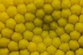 Beautiful yellow chamomile's stamen — Stock Photo