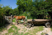 Brown horse with cart — Stock Photo