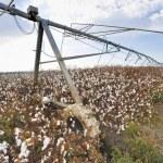 Irrigation Equipment — Stock Photo #67326067