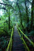 Ang Ka Nature Trail — Stock Photo