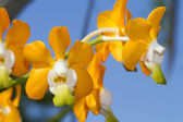 orchid species — Stockfoto
