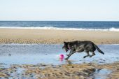 Dog jumping to fetch ball — Stock Photo