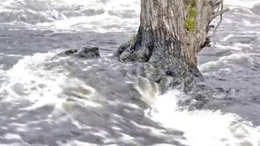 Rapids on tree root — Stockvideo