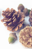 Pine cones with acorns on white wooden texture — Stock Photo