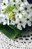Bouquet of white roses with Ranunculus, viburnum and eucalyptus — Stock Photo