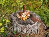 Un tas de champignons sauvages sur une souche d'arbre dans une forêt — Photo