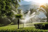 System nawadniania trawników do nawadniania roślinności na brzasku ranny — Zdjęcie stockowe