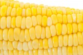 Detail of corn panicle — Stock Photo