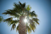 Palm and sun — Stock Photo
